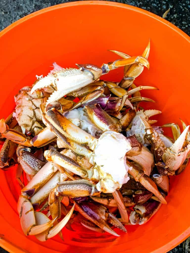 How To Cook Crab And Crab Gumbo This Dungeness Season